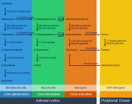 adrenal_steroids_pathways.png